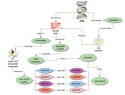 DNA Mind Map using Inspiration 9IE